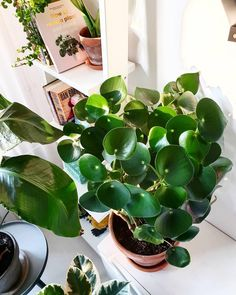 46 DIY Plant Stand ideas to Fill Your Living Room With Greenery These trendy Home Decor ideas would gain you amazing compliments. Check out our gallery for more ideas these are trendy this year. Plant Images, Plant Pictures, Exotic Plants, Green Plants, Indoor Garden, Indoor Plants, Chlorophytum, Flower Pot Design, Living Room Plants
