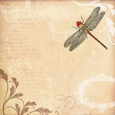 Background, Background Image, Wallpaper, Dragonfly