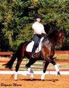 Quality 2008 Oldenburg gelding with excellent type, quality and character! Free shoulder and electric hind leg make for a dream to train! Already at 3rd level with confirmed changes! Take him out - you are sure to be remembered! $85,000