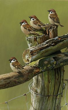 Trendy Sparrow Bird Drawing Paintings Ideas You are in the right place about Birds Drawing easy Here Pretty Birds, Love Birds, Beautiful Birds, Beautiful Pictures, Small Birds, Little Birds, Vogel Gif, Sparrow Bird, Wow Art