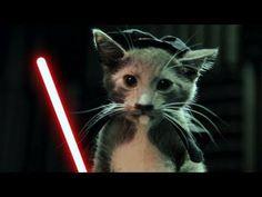 ta da da ta dada ta dada. Starwars kitty!