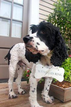 Not your ordinary RING BEARER Pillow Ring Bearer dog bone - Include your 4 legged friend. So FUN. $19.95, via Etsy.