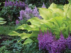 So pretty! ~ Astilbe with Hosta 'Sun Power' garden / gardening inspiration ideas