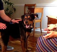 Dog Long-Believed to Be Dead Found Alive