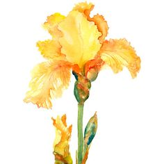Iris with Buds in Glass Vase - Watercolor Botanical in yellow, orange, lime green, blue green, coral. $28.00, via Etsy.