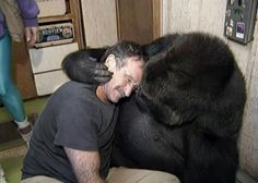 Quand de Grands Animaux font de Gros Câlins ... Koko le Gorille et Robin Williams