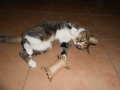 Check out these awesome #cat toys you can make at home in about five seconds flat!