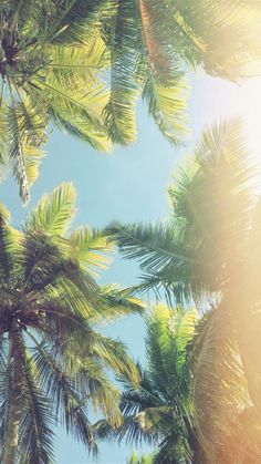 Aloha Palm Trees iPhone 6 Plus HD Wallpaper Palm Tree Iphone Wallpaper, Wallpaper S8, Summer Wallpaper, Nature Wallpaper, Mobile Wallpaper, Wallpaper Backgrounds, Beautiful Wallpaper, Iphone Backgrounds, Photo Wallpaper