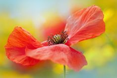 100th Anniversary of World War One - Jacky Parker