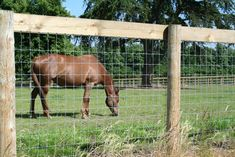 Image result for Horse Fence