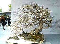 esculturas em troncos de madeira - Pesquisa Google Bonsai Tools, Bonsai Art, Bonsai Plants, Bonsai Garden, Bonsai Styles, Mini Bonsai, Small Trees, Art Of Living, Tree Art