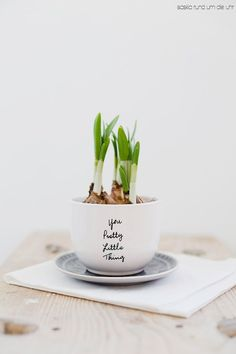 Add a little greenery to your home with this DIY bulb mug project. Indoor Planters, Diy Planters, Indoor Garden, Planter Pots, Plants Indoor, Fresh Flowers, Spring Flowers, Deco Nature, Garden Bulbs