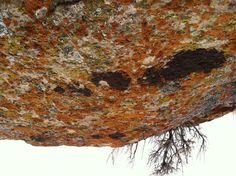 Lichen-covered Sandstone