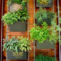 Grow blooms, not bullets. Transform surplus ammo cans into planters for your garden.
