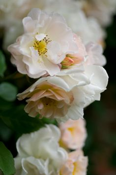 Blossom. Sweet, delicate, seasonal, fruit bearing. Attracts bees to pollinate so fruit can form. Another of nature's best designs