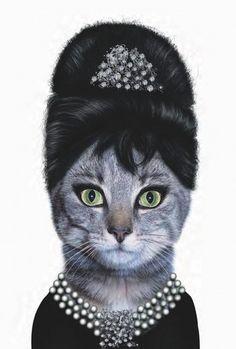 Cat Audrey Hepburn