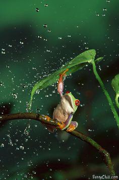 nature's umbrella ✿⊱╮
