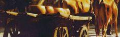 IL RITORNO DELLE VACCHE ROSSE: INTERVISTA A LUCIANO CATELLANI  http://www.terradidelizie.it/it/blog/il-ritorno-delle-vacche-rosse-intervista-luciano-catellani
