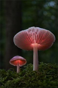 Luminous von Moonshroom  I guess bioluminescent mushrooms are real. I didn't believe it; had to look it up.