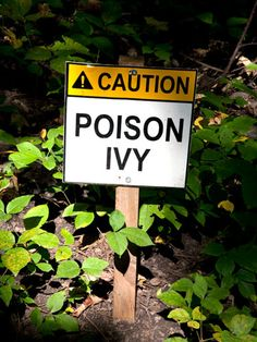 Click for the best ways to treat poison ivy and bug bites.