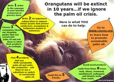 Orangutans will be Extinct in 10yrs if we continues to purchase and consume Palm Oil....!