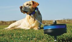 Give your pet more room to roam in your campground | RV Travel