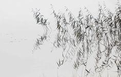 Fog silnece 2, 2015 @Mirja Paljakka