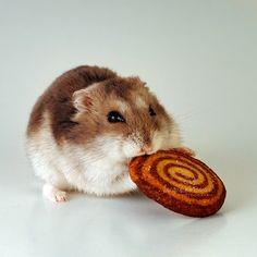 Nomnom cookie