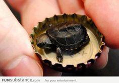 Super tiny turtle