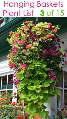 How to plant 15 beautiful hanging baskets with complete designer plant lists for each! Lots of tips on growing best hanging plants Hanging Plants Outdoor, Plants For Hanging Baskets, Hanging Flower Baskets, Patio Plants, Plants For Sun, Potted Plants, Potted Flowers, Flower Plants, Plants Indoor