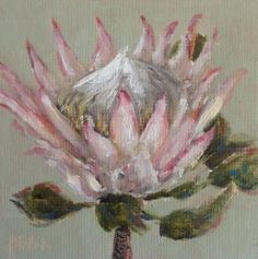 """King Protea #33"" daily paintings by Heidi Shedlock"