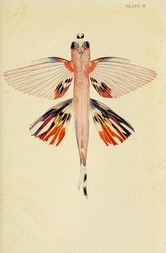 https://flic.kr/p/cJihZj   n118_w1150   The Arcturus adventure :. New York :Putnam,1926.. biodiversitylibrary.org/page/4686460