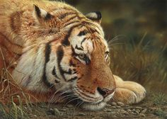 Hyper-Realistic Animal Paintings by Denis Mayer Jr.