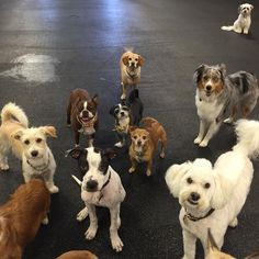 What's up from the pack! Here is Bingo, Moo, Leo, Dee Dee, Willie, Peppy, Buster, Franklin & Milo. #sundayfunday #dogs #picoftheday #instadaily #packmentality