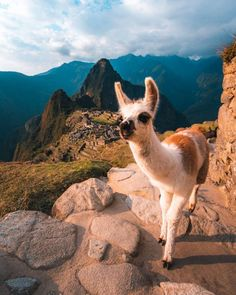 Tours a Machu Picchu y Cusco - Peru Pachamama Travel Peru Travel, Africa Travel, Travel List, Budget Travel, Machu Picchu, Cusco Peru, The Great Escape, Inca, Adventure Tours