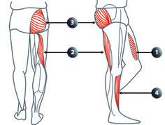 Se tordent les muscles du dos