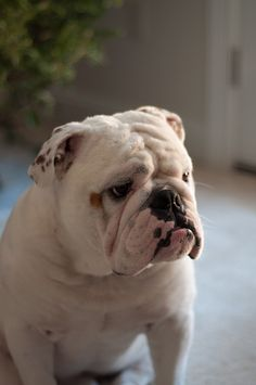 Why the serious face, wrinkly darling?