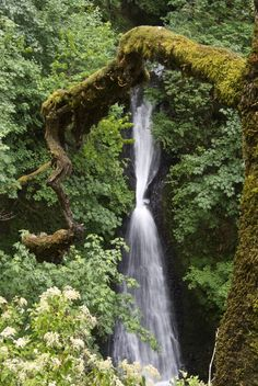 Lower Shepperd's Dell Falls in the Columbia River Gorge #Oregon #HikeOregon #Hikelandia #OregonHikes