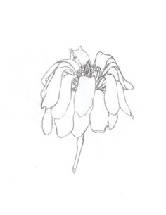 wilting flower drawing - Google Search