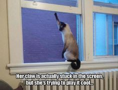 Funny Picture Dump Of The Day 39 Pics and like OMG! get some yourself some pawtastic adorable cat apparel!