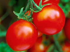 Start sowing tomato seeds in early Spring --> http://hgtvgardens.com/tomatoes/how-to-grow-tomatoes?soc=pinterest