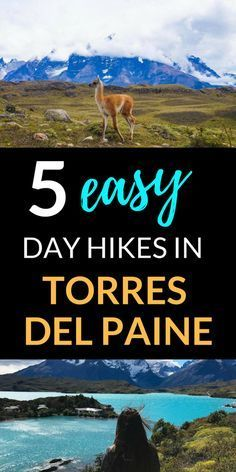 5 Easy Day Hikes in Torres del Paine Chile – Wandering Sunsets - South America Patagonia Travel, In Patagonia, Backpacking South America, South America Travel, Costa Rica, Peru, Chili, Torres Del Paine National Park, Equador