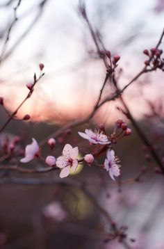 Delicate beauty blossom