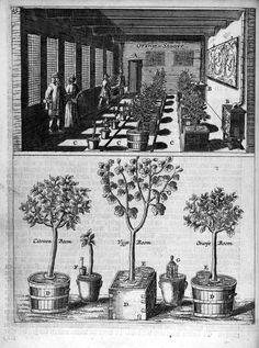 Oranje - Stoove (upper); Citroen Boom - Vijge Boom & Oranje Boom (lower). From: Jan van der Groen - Den Nederlandtsen Hovenier (1670)