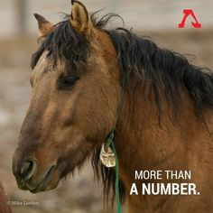 End the Wild Horse Slaughter.
