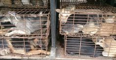 Governor Brown. Tell Sister State, Canton Province, That We're Opposed to the Torture and Consumption of Dogs and Cats.