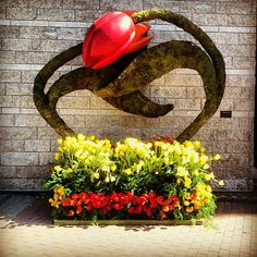 #TulipFestival is one of the great things about #Ottawa! Fun shot from http://instagram.com/auroramoon    #GoBillings
