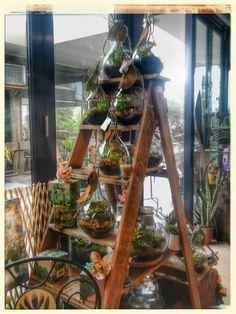 Fairy garden terrarium instore now
