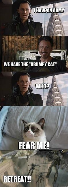 #GrumpyCat #meme For more Grumpy Cat stuff, gifts, and meme visit www.pinterest.com/erikakaisersot - Tap the link now to see all of our cool cat collections!