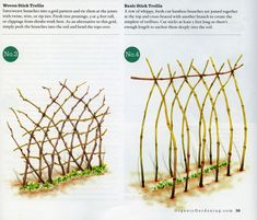I am thinking of a more natural trellis vs the metal fence hoop design...